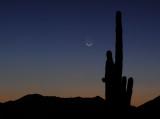 Comet Pan-STARRS: March 12, 2013