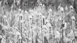 Christmas Card #2  2012