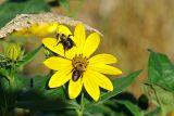 Morning Bees #1