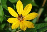 Morning Bees #3