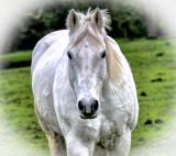 horsewhtvet.jpg
