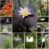 Collection in Spice Garden