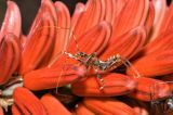bug on flowers (_DSC5279)
