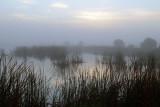 20121217 Foggy Morn at South Click Pond  _8641