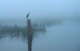 20130129 Morning Fog   _