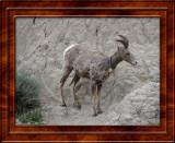 July 13 Badlands National Park South Dakota