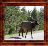 July 21 Yellowstone National Park