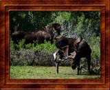 July 27 Teton National Park