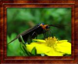 Butterflies, Moths and Bugs