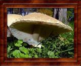 Mushrooms/Fungi