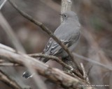 Townsend' s Solitaire