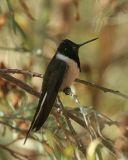 Birds of Southern Peru