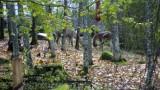 Two Alpacas In Quarantine
