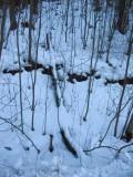 A Frozen Ditch