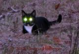 Rosie Glowie at Twilight