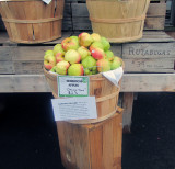 Heirloom Vermont Apples
