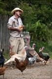 feeding fowl