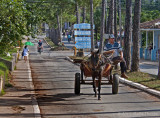 horse buggy Vinales