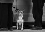 el perro que veia cosas