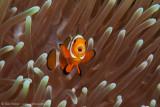 Operatic Nemo