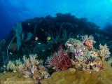 Reef scene, Misool
