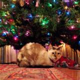 Grace under the tree.jpg
