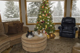 2012 Holidays in Montana
