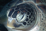 Turtle Up Close and Personal