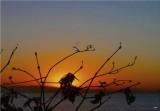 Thursday dawn