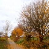 Autumn leaves...13 November 2012 (438)