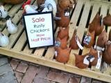 Rusty chickens...