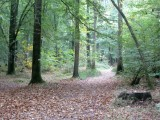 Tom and Jay head into the chestnut woods to look for...