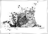 cheetah crouch