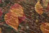 Floating Leaves.jpg