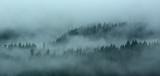 Foggy Forest.jpg