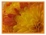 Mum petals2.jpg