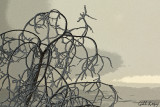Frosted branches2.jpg