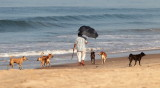 Indien / Goa / 2012 - 2013
