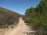 Camino Rio Road along the San Pedro River