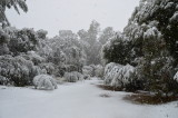 Boyce Thompson Arboretum 2013