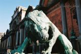 2 - Lion in front of the Glyptoteck - Copenhague.jpg