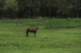 Caballo en el prado