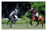 polo in Hudson