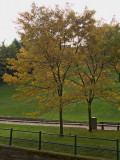 Autumn in the city (4)