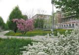 Hospital Steinhof