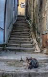 Rua dos Armazens