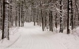 Forêt enneigée_Snowy forest