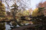 November's light in Botanical Garden