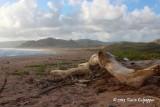 Morgan Lewis Beach