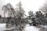 Vejlbo Mose winter 01